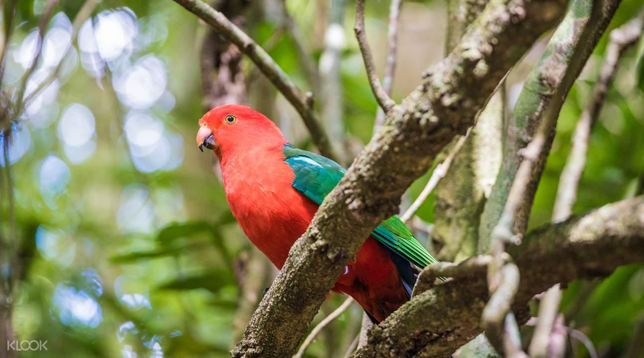 见识各种热带雨林动物
